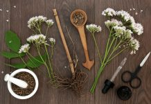 valerian root and flower botanical herb