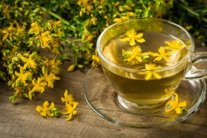 st john's wort tea botanical herb